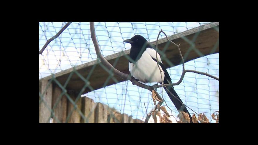 Video Záchrana zraněných a handicapovaných zvířat