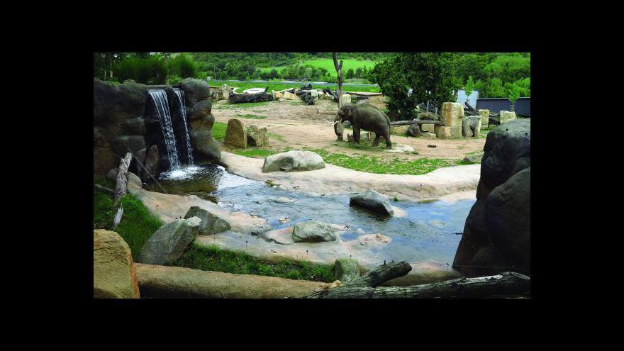 Video Ředitel zoo: O úspěchu můžeme mluvit, až se slůně narodí
