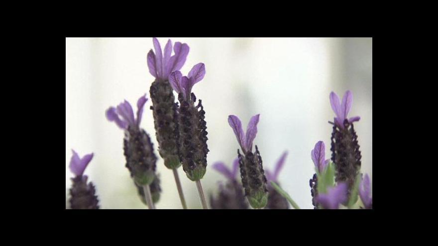 Video Vlková: Na jaře je ideální doba vylepšit si saláty květinami