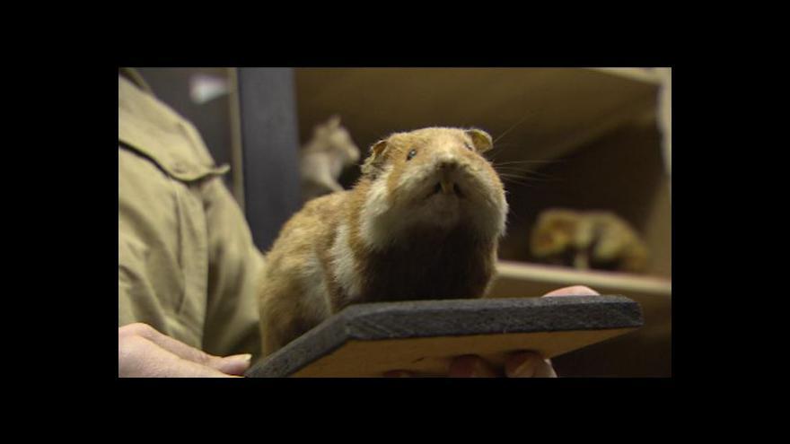 Video ŘSD prošetřuje studii o výskytu křečka na Kroměřížsku
