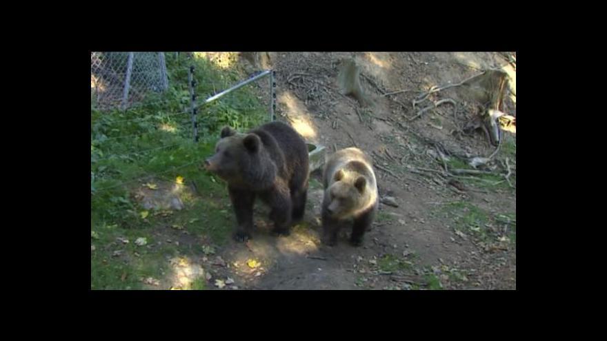 Video Co bude se zvířaty z táborské zoo?