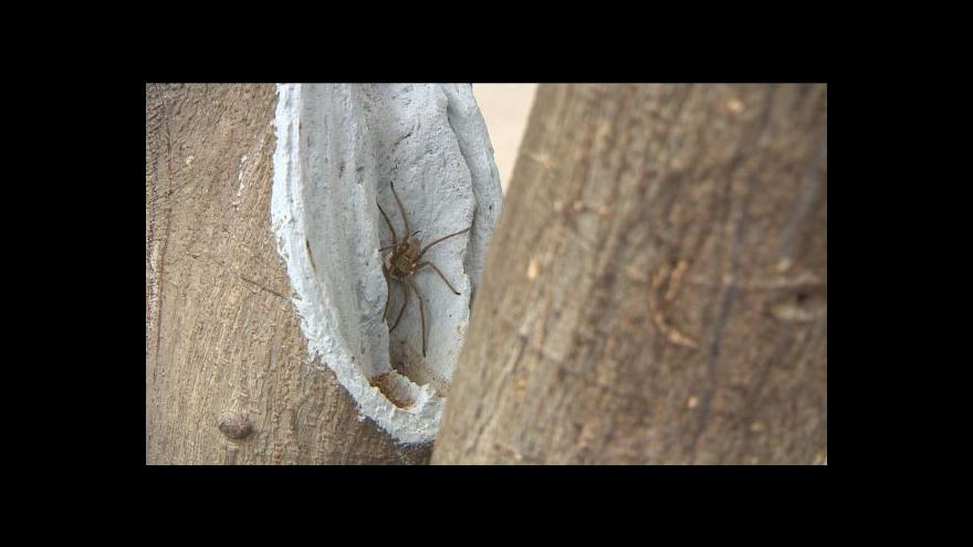 Video Pavouci mezi návštěvníky zoo