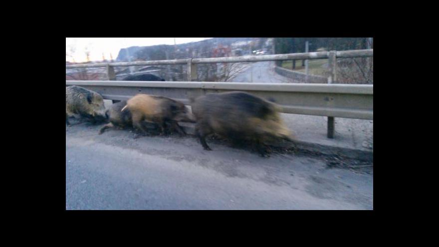 Video Prasata na silnici v Ústí nad Labem