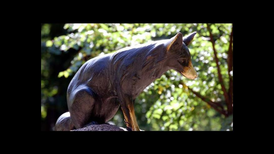 Video Ukradená socha lišky Bystroušky