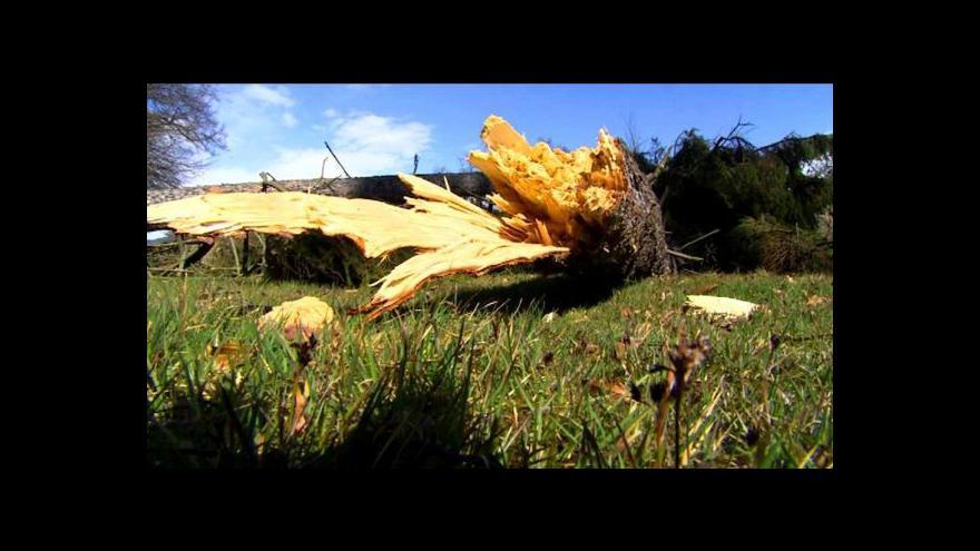 Video Události: Do polomů po bouřkách se pouští škůdci