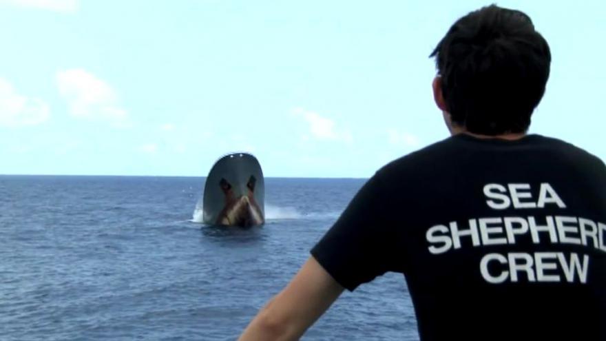 Video Sea Shepherd dosáhli svého – Thunder už lovit nebude