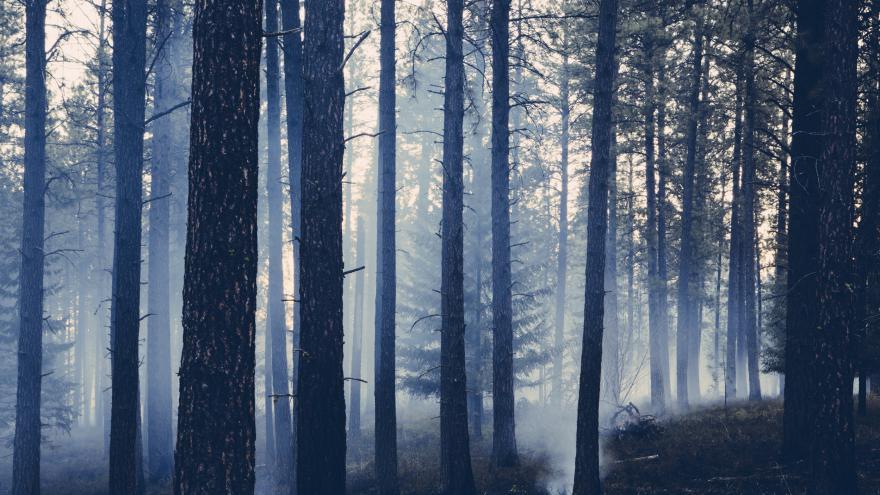 Video Požár lesa na Rakovnicku