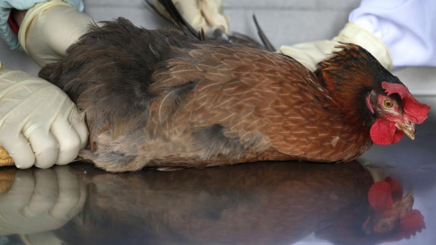 Video Ptačí chřipka na Olomoucku