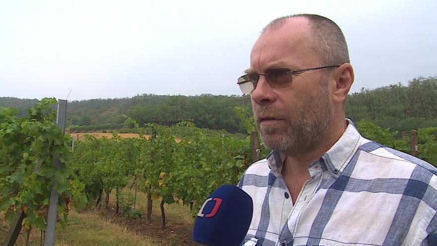 Video Prezident Svazu vinařů ČR Tibor Nyitray o úrodě vína