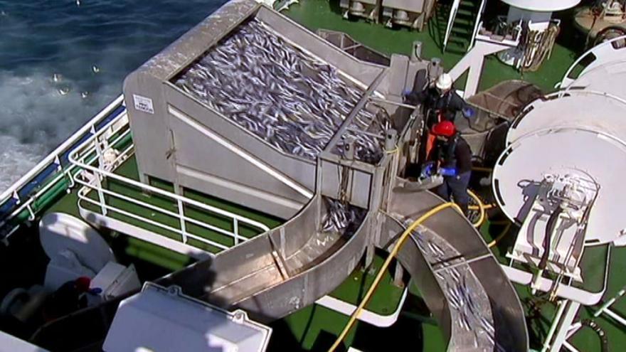 Video Udržitelný rybolov jako naděje pro ubývající zásoby ryb