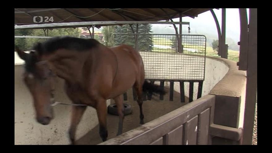 Video Přípravy dostihových koní pod dohledem Josefa Váni
