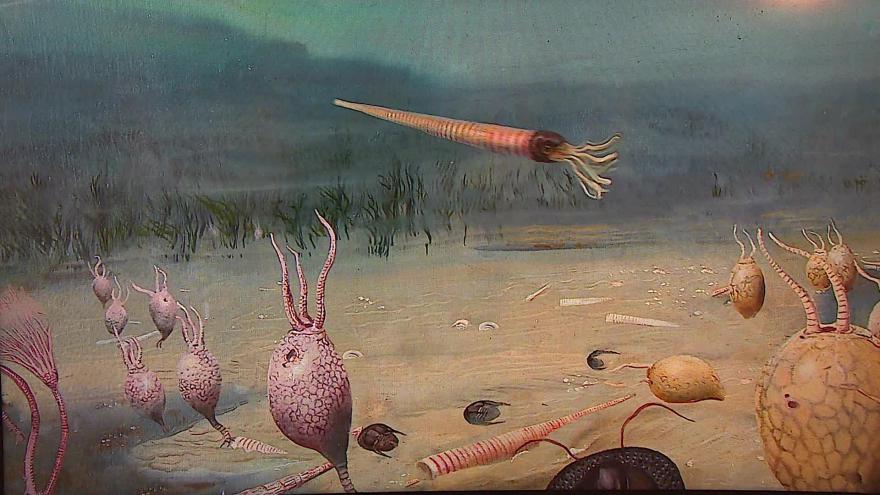 Video Zápas ichtyosaurů v muzeu