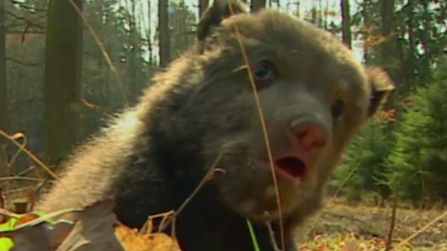 Video Režisér Chaloupek: Medvědi Matěj, Vojta i Kuba si mě pořád pamatují