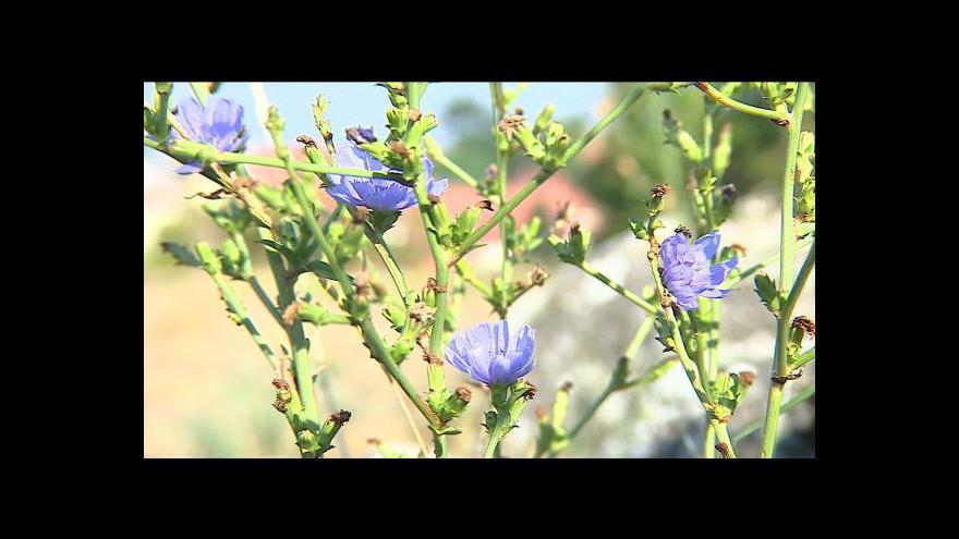 Video Otevření Getsemanské zahrady