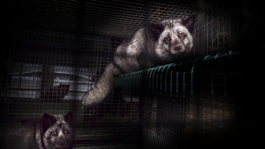 Video ŽIVĚ: Poslanci řeší stykový zákon i novelu proti týrání zvířat