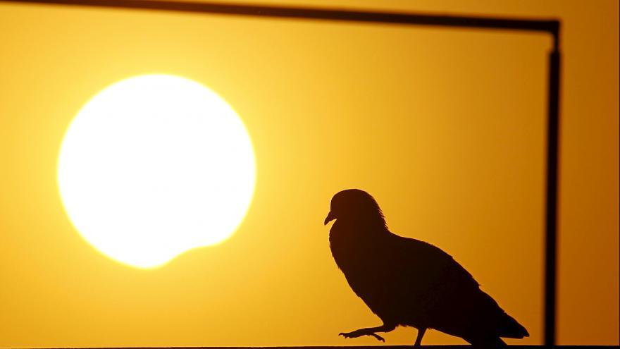 Video Zatmění Slunce nad USA