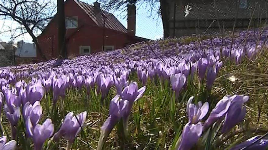 Video Louky v Lačnově nabízejí pohádkovou podívanou