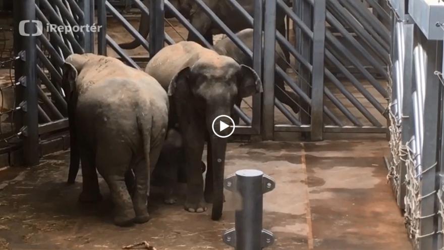 Video iReportér: Janita s malým slůnětem měly první návštěvu