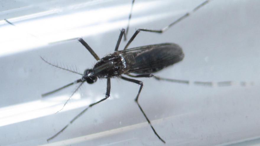 Video Virus zika na Floridě