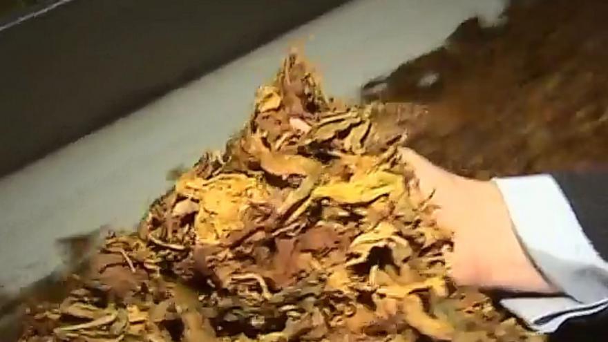 Video Z nelegálního kuřiva bude otop. Celníci likvidovali 112 tun tabáku