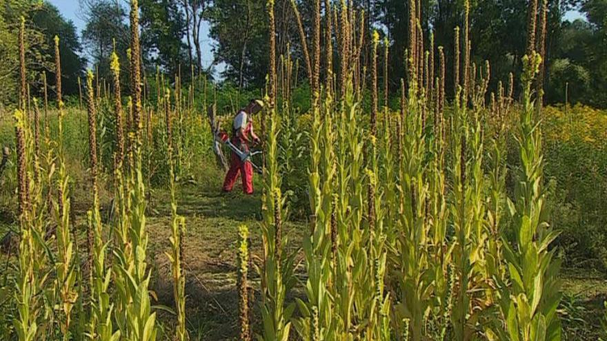 Video Závislí lidé pomáhají na zapovězeném ostrově přírodě i sobě