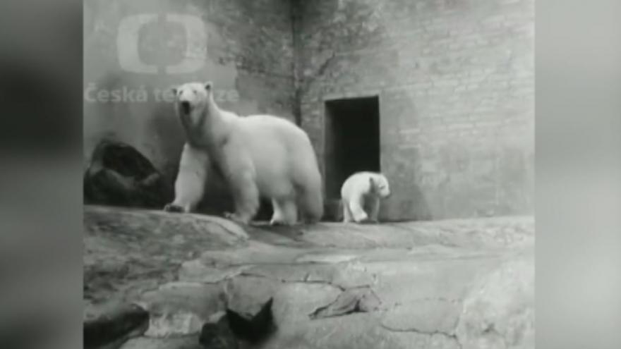 Video Archivní záběry z pražské ZOO: Mládě ledního medvěda Váňa a Petr, slon harmonikář