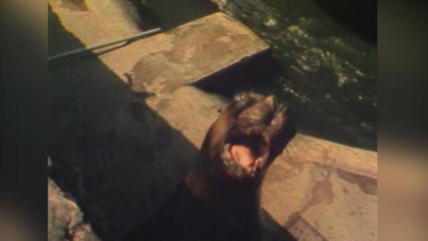 Video Pražská ZOO v roce 1982