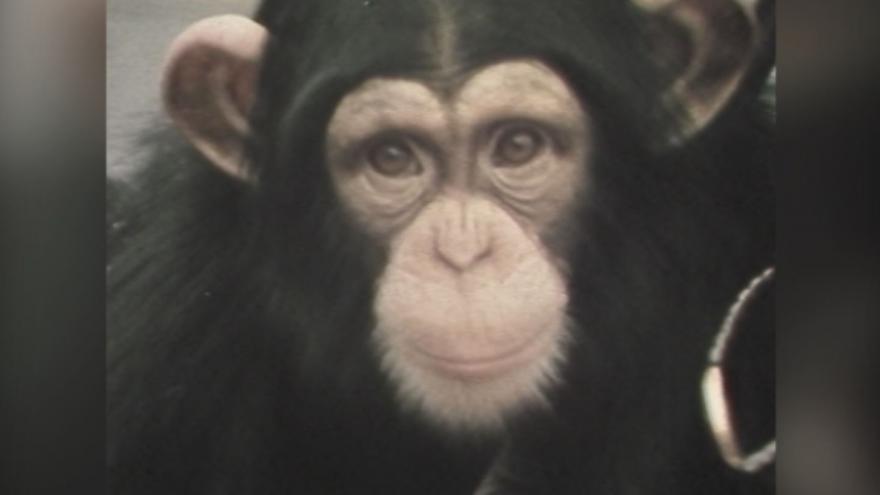 Video Pražská ZOO na jaře roku 1982