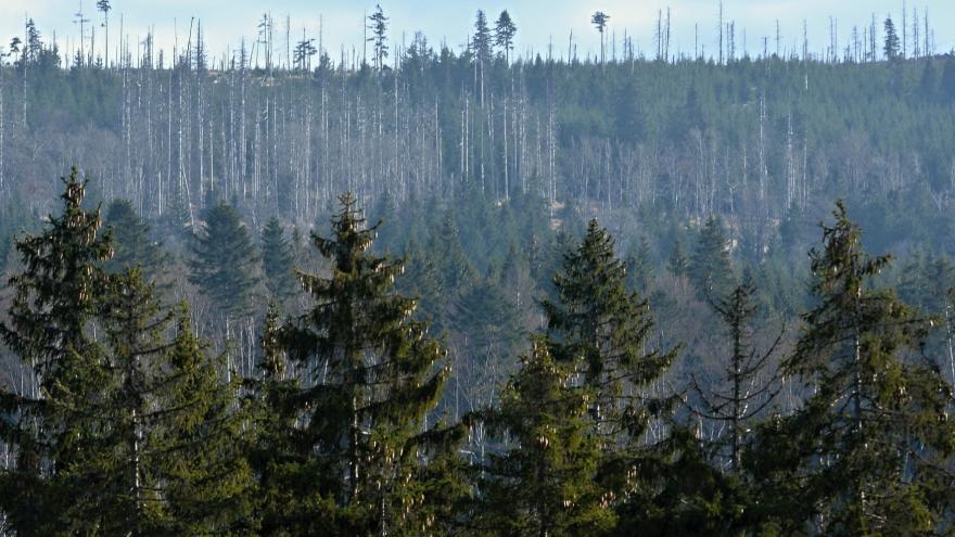 Video Místo školy na brigádu. Studenti pomáhají s obnovou lesů po kůrovci