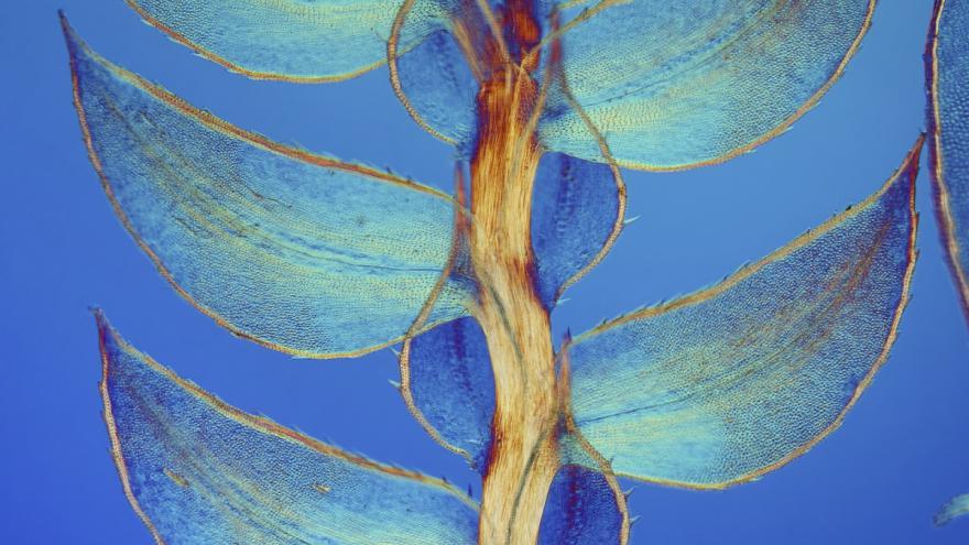 Video Co se děje v buňkách opičí ledviny