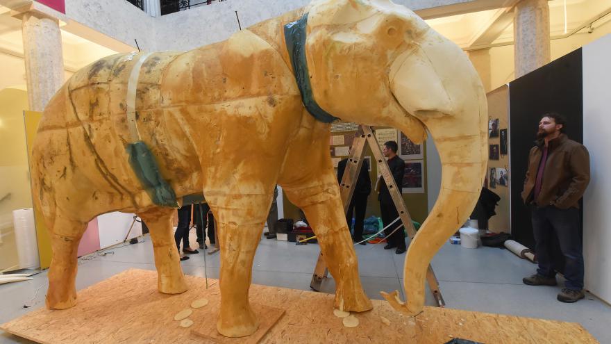 Video V Opavě preparují slona