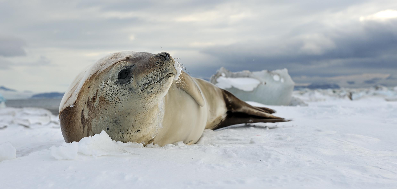 Video Setkání expertů na Antarktidu v Brně
