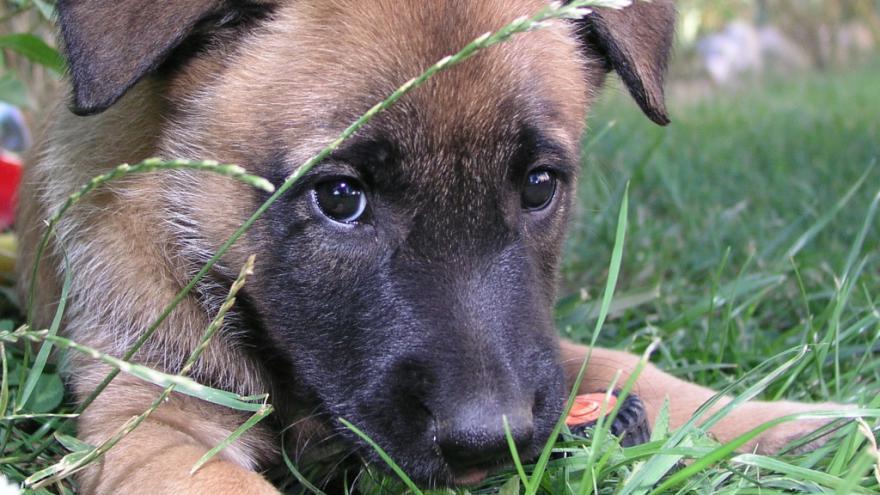 Video Resuscitace psa
