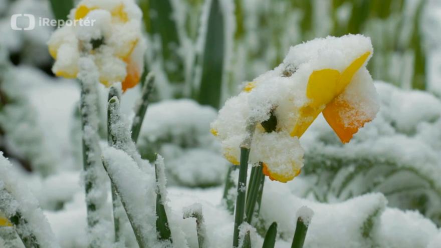 Video Sněžení na Hlučínsku