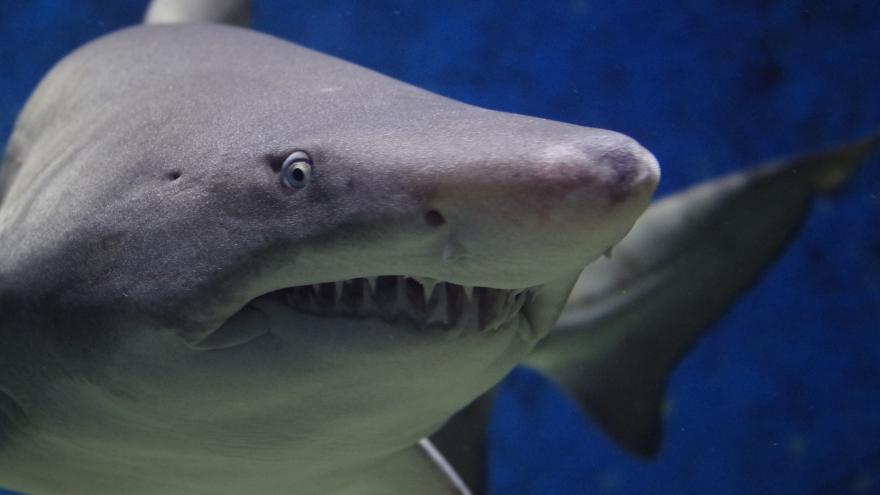 Video Richard Jaroněk o žralocích