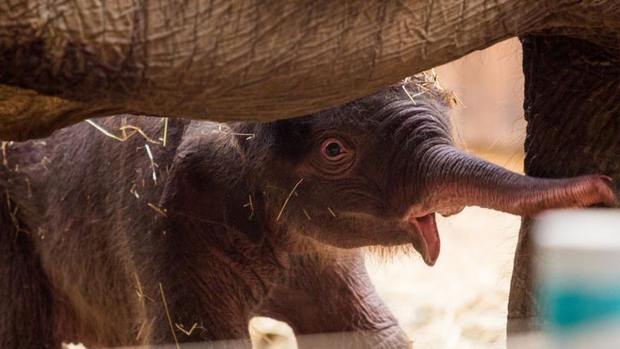 Video Sloní mládě