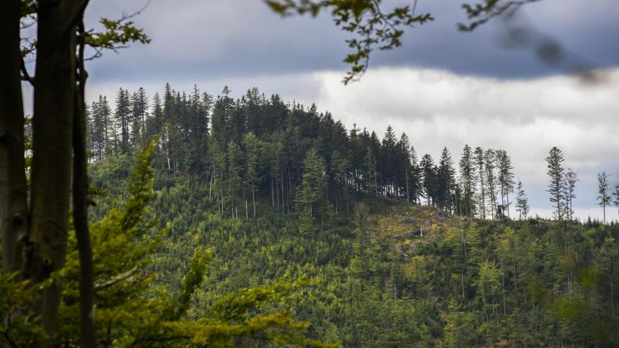 Video Fokus Václava Moravce - V lese