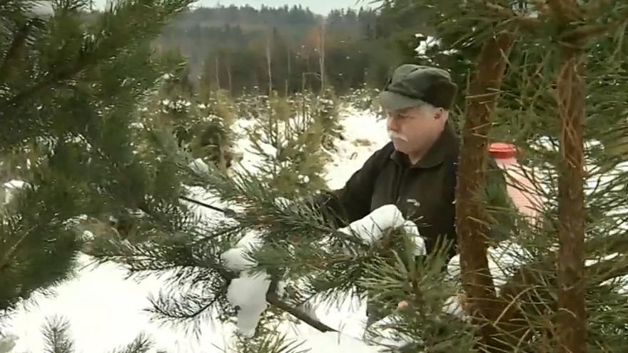 Video Vánoční stromky zdarma
