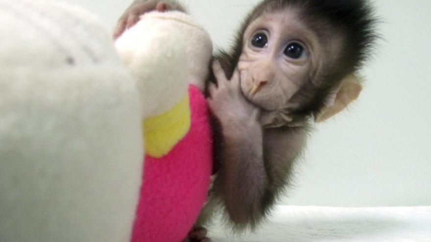 Video První naklonovaní primáti