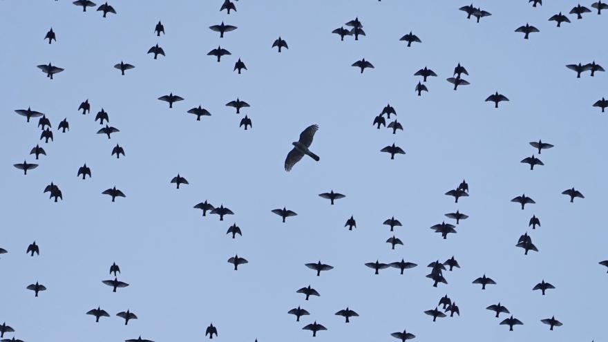 """Video Ornitolog: """"Západočeští čápi už nelétají do Afriky, ale využívají k zimování skládky odpadu ve Španělsku."""""""
