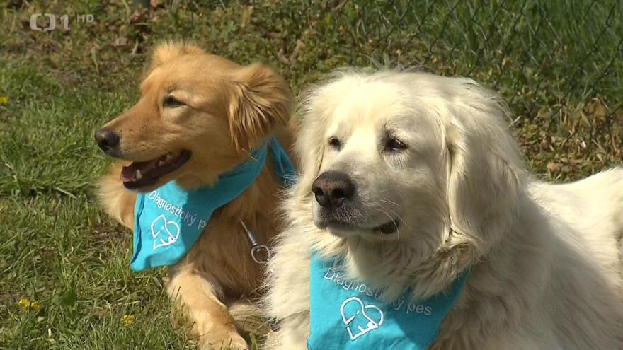 Video Psi vycítí rakovinu