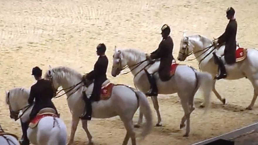 Video Události: Záchrana lipicánů z Hostouně
