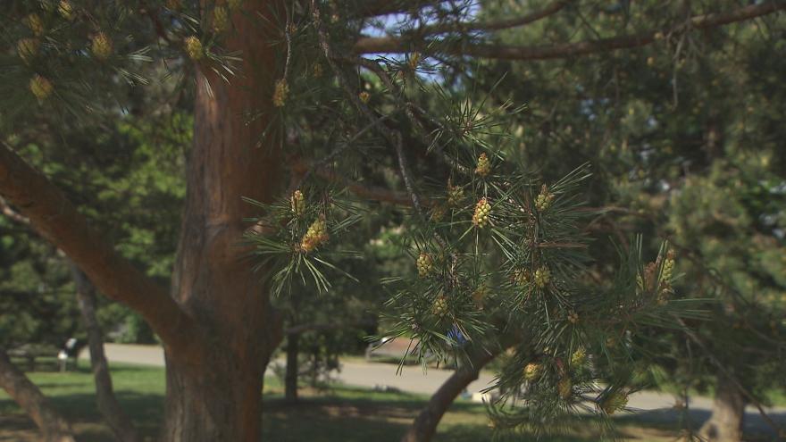 Video 90' ČT24 - Pyl, řepka a nedostatek včel