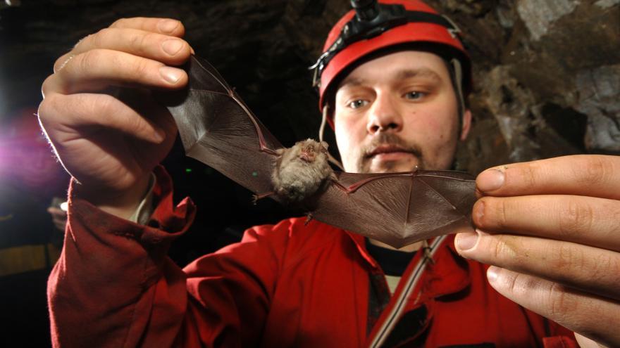 Video Opravy zámku blokuje netopýr