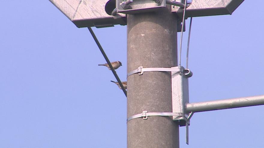 Video Ptáky na stožárech vysokého napětí chrání speciální bidla