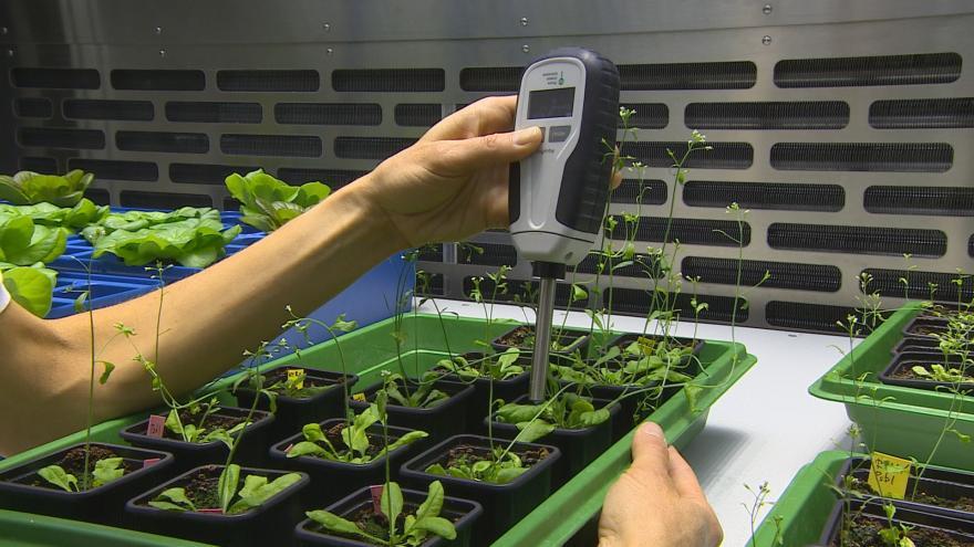 Video Měření rostlin pomocí speciálního přístroje