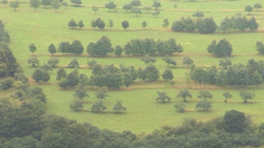 Video Ekofarma zabraňuje erozi vysazováním stromů