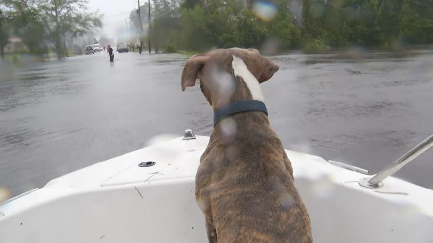 Video Zvířata v nouzi: lidé zachraňují opuštěné psy a kočky ze zatopených oblastí