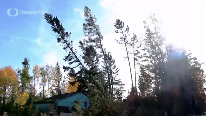 Video Pád stromu v Suchém na Blanensku