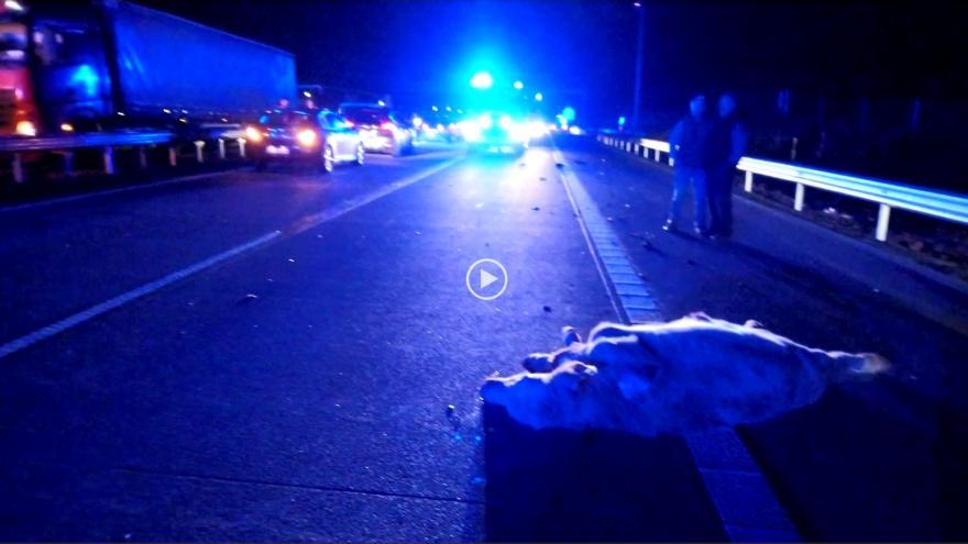 Video Nehoda na D1